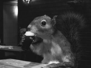 guinness_squirrel