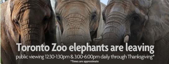 Elephants_Leave