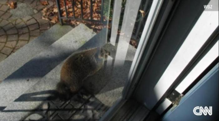 Groundhog traps man in house