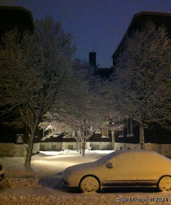 Trees_Car