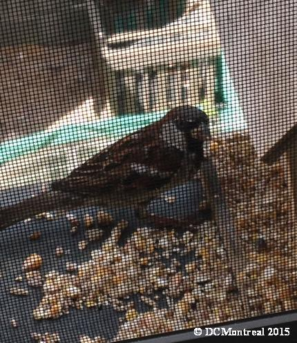 Bird_Guest