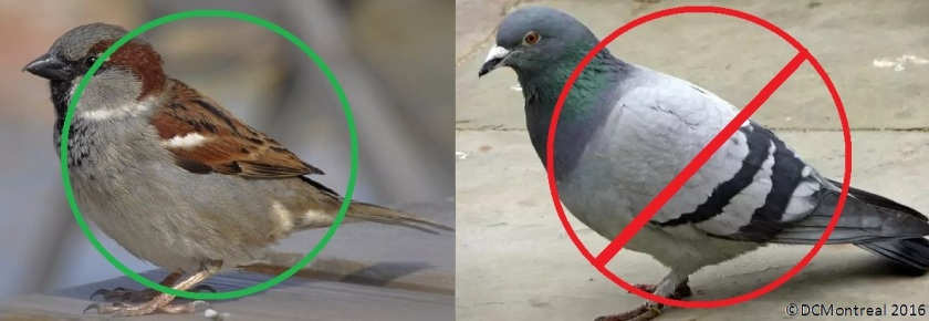 Capture_Bird