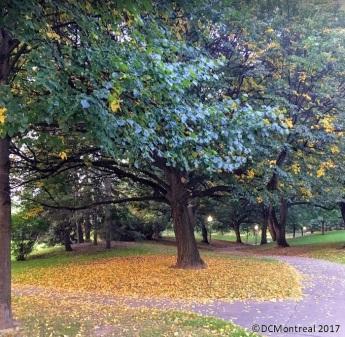 Tree_Yellow