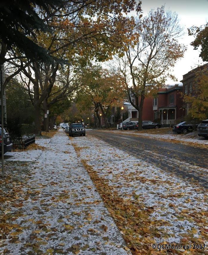 No Strutting on Snow LeafMixture